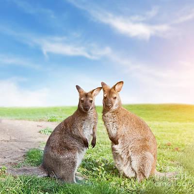 Kangaroo Couple Australia Poster by Michal Bednarek