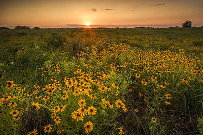 Kansas Wildflowers Poster