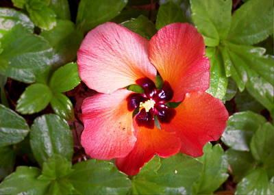 Kauai Flower Poster