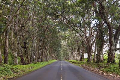 Kauai Tree Tunnel Road Poster
