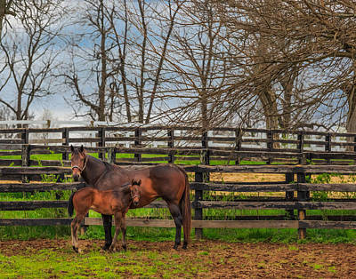 Kentucky Mare And Foal Poster