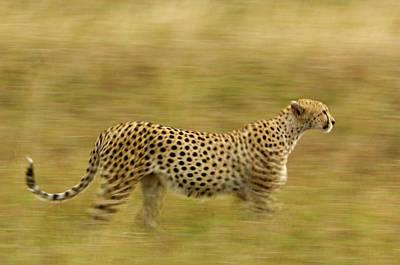 Kenya, Masai Mara Poster by Jaynes Gallery