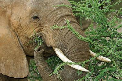 Kenya, Samburu National Reserve Poster