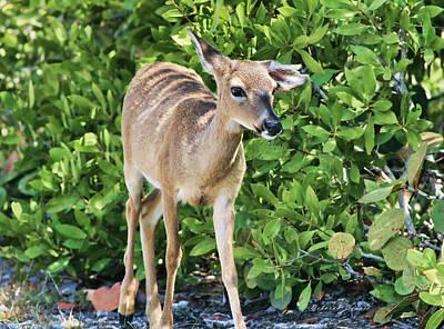 Key Deer Cuteness Poster