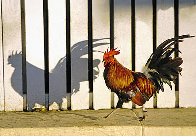 Key West Rooster Poster