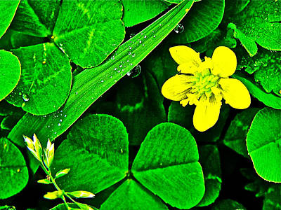 Kidneyleaf Buttercup In Chickasaw Village Site At Mile 262 On Natchez Trace Parkway-mississippi  Poster