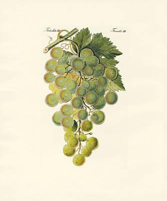 Kinds Of Vines Poster by Splendid Art Prints