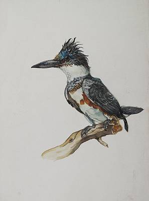 Kingfisher Watercolor Poster by Alfred Ng