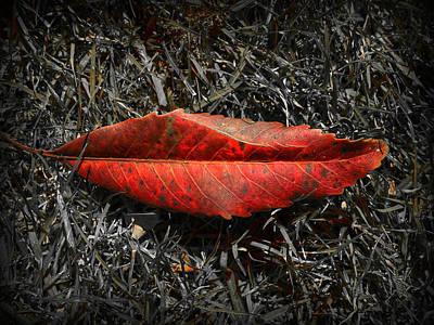 Kiss Of Leaf Poster by Wayne Sherriff