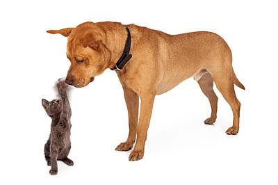 Kitten Batting At Nose Of Large Breed Dog Poster