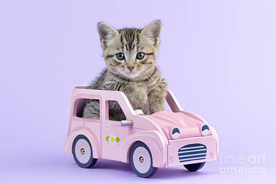 Kitten In Pink Car  Poster
