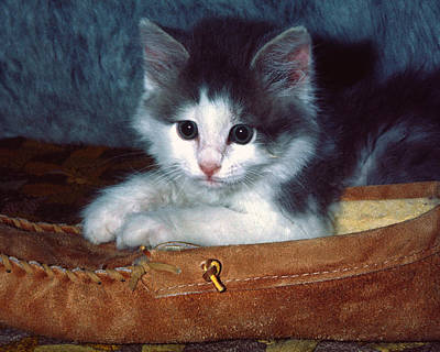 Poster featuring the photograph Kitten In Slipper by Sally Weigand