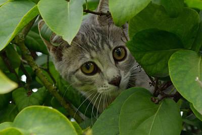 Kitten In The Bushes Poster