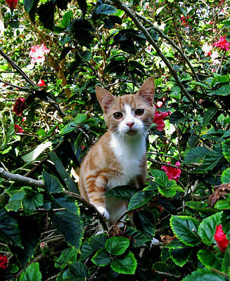 Kitten Poster by Pamela Walton