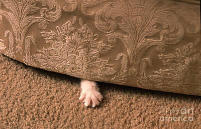 Kitten Paw Poster
