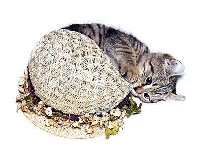 Poster featuring the photograph Kitten With An Easter Bonnet by Susan Leggett