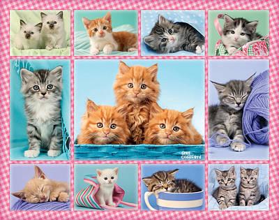 Kittens Gingham Multipic Poster by Greg Cuddiford