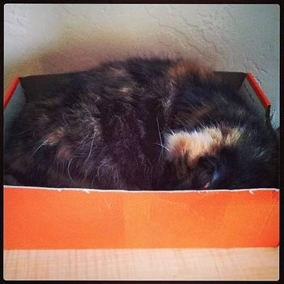 #kitty #cat #catinabox #silly #funny Poster