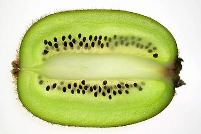 Kiwi Fruit (lengthwise Slice), Backlit Poster