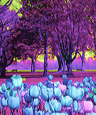 Kiwi Sky With Tulips Poster by Ann Johndro-Collins