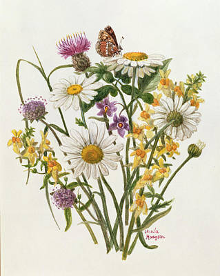 Knapweed, Ox-eye Daisy And Toad Flax Wc On Paper Poster