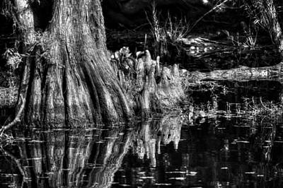 Knees Deep In A Louisiana Bayou In Black And White Poster by Chrystal Mimbs