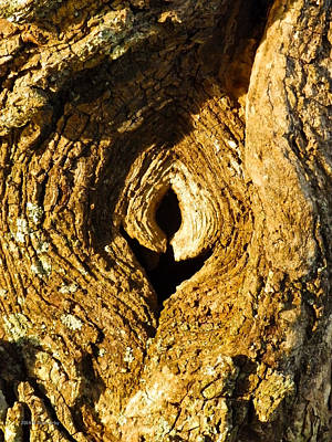 Knothole Or Eye Poster by Nick Kirby