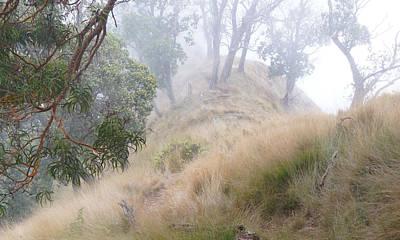 Misty Koa Ridge  Poster by Kevin Smith