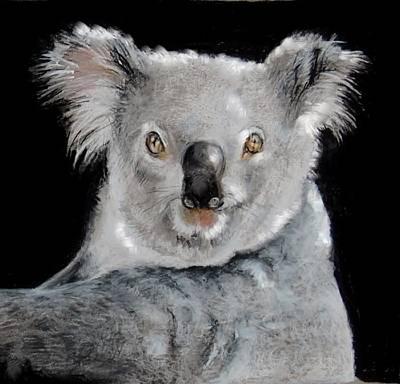 Koala Poster by Jean Cormier