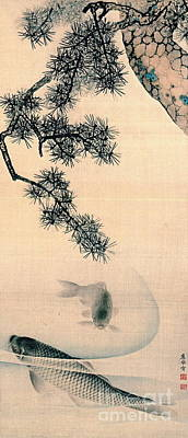 Koi And Pine Branch 1790 Poster