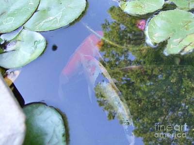 Poster featuring the photograph Koi by Deborah DeLaBarre