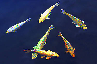Koi Floating In Blue Poster by Wernher Krutein