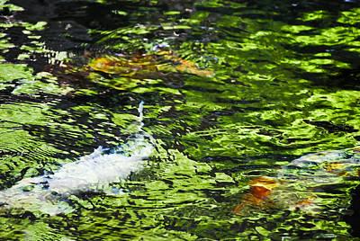 Koi Pond Poster by Christi Kraft