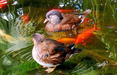 Koi Pond Ducks Poster