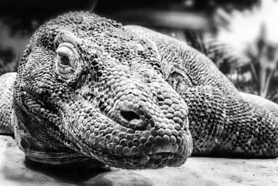 Komodo Dragon Poster by Anthony Citro