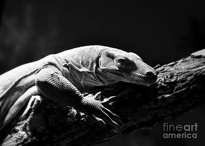 Poster featuring the photograph Komodo Dragon by Lisa L Silva