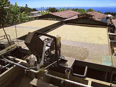 Kona Coffee Bean Drying Beds - Hawaii Poster by Daniel Hagerman