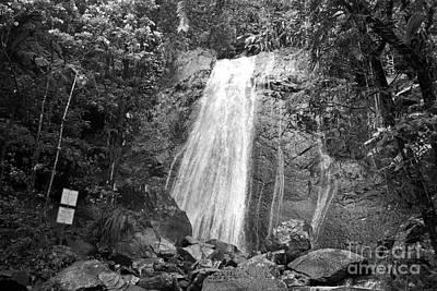 La Coca Falls El Yunque National Rainforest Puerto Rico Print Black And White Poster by Shawn O'Brien