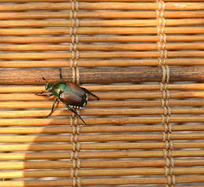 La Cucaracha The Bug Poster by Ion vincent DAnu