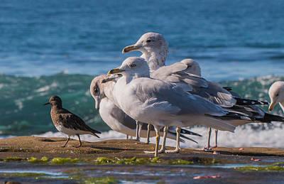La Jolla Birds Poster