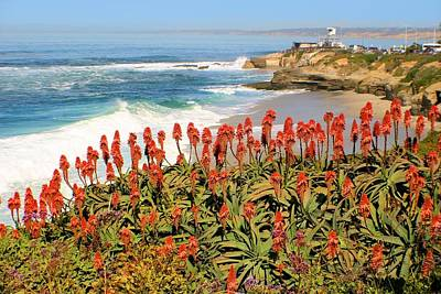 La Jolla Coast With Flowers Blooming Poster