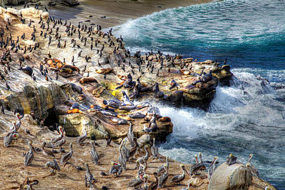 La Jolla Cove Wildlife Poster