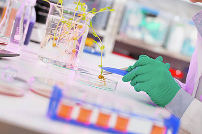 Lab Assistant Examining Plant Poster