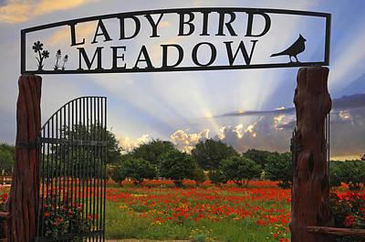 Lady Bird Meadow - Fine Art By Lynn Bauer Poster by Lynn Bauer