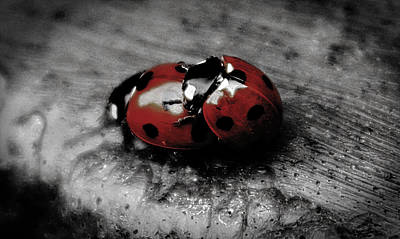 Lady Bug Love Poster by Martin Newman