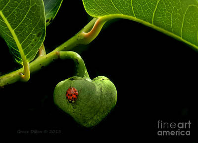Lady Bug On Pond Apple Poster by Grace Dillon