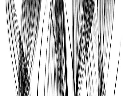 Lady Palm Fronds Poster by Albert Koetsier X-ray