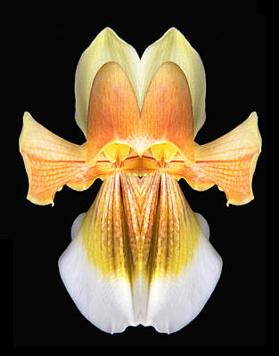 Lady Slipper Orchid Angels Poster by Robert Jensen