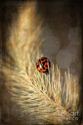 Ladybird Poster by Darren Fisher