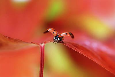 Ladybird In Autumn Poster